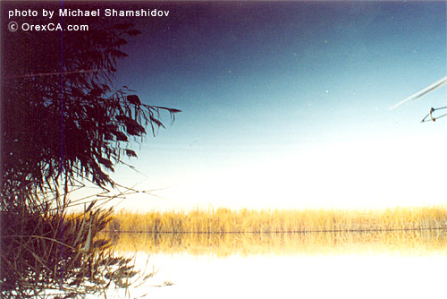 Nature of Arnasay