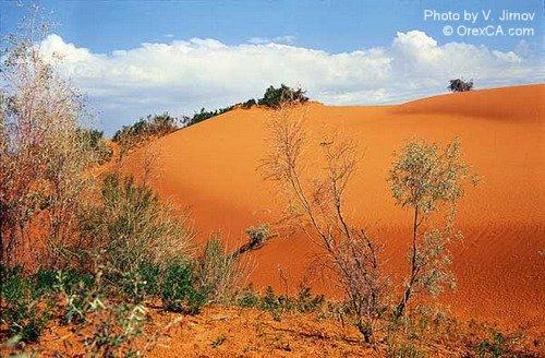 Barchan sands