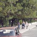 Batumi magnolias