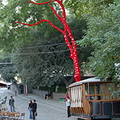 Tbilisi pictures. The tree of love
