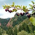 Djeti-Oguz gorge