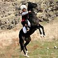 Turkmenistan horses