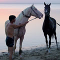 Turkmen horses