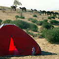Visit nomadic villages