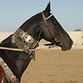 Horse decoration