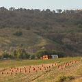 Onion field — Луковые поля. Чарвак