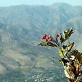 Mountain fruit — Горный фрукты. Чарвакские горы