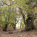 Ореховая роща в Чарвакских горах