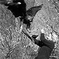 Eagle hunting  — Соколиная охота