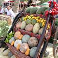 Rich harvest — Богатый урожай