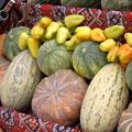 Vegetable abundance — Овощное изобилие