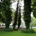 Tashkent Broadway