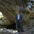 Маджерумская биота