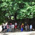 Огромная чинара - местная достопримечательность