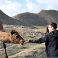 Meeting with camels