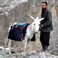 Горный таджик