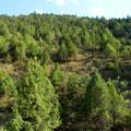 Landscape hillside with juniper — Пейзаж склона холма с Арчой