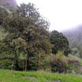 Landscape in Urukli — Пейзаж в Урукли