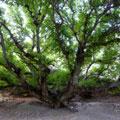 Zaamin National Park — Зааминский национальный парк