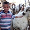 The little shepherd — Маленький хозяин