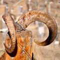 Рога на могильных столбах - символ иного, небесного мира, где обитают предки и куда отправляется душа