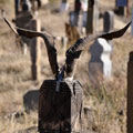 The horns at the grave — The tradition of placing the horns at the grave - an ancient custom, which means communication with the totemic ancestor-progenitor. Традиция размещать рога на могиле -  древний обычай, означающий  связь с тотемным первопредком-прародителем