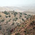 Горы, покрытые фисташковыми лесами