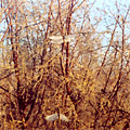 Nature of Arnasay —  Nature of Arnasay photo by Michael Shamshidov - michael@orexca.com