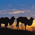 Deserts & Steppes of Central Asia