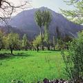 Shakhimardan mountain area