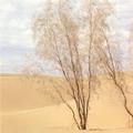 Turkmenistan nature. Karakum desert