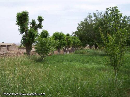 Деревня ххх фото 78968 фотография