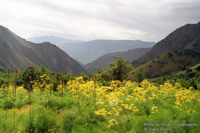 Заповедники и национальные парки Узбекистана Список и описание  Природа Узбекистана Фото Анвара Ходжаниязова